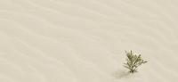 【閱讀食堂】逃往沙漠!逃避被世界同化